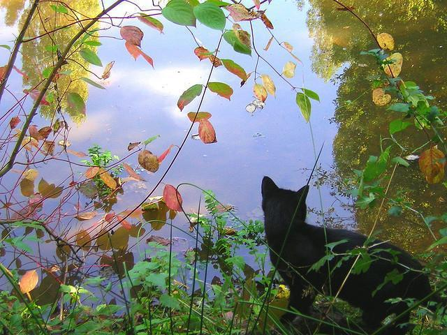 Contemplating Cat by the water