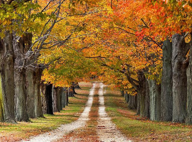 Beautiful Tree lined road