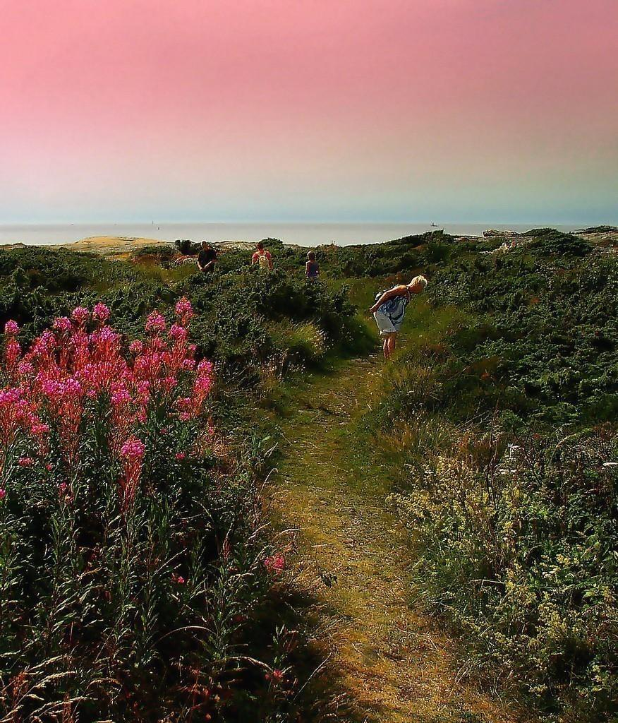 Beautiful path leading to the ocean along the southwest coast of Sweden