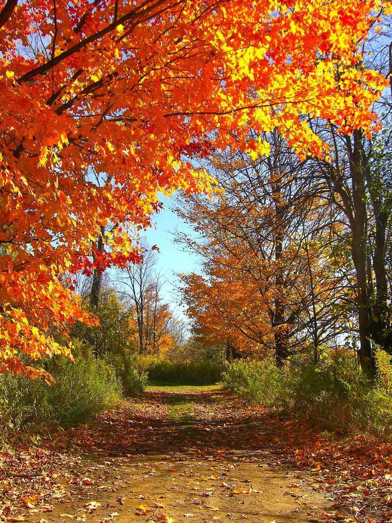 Beautiful sunny autumn day