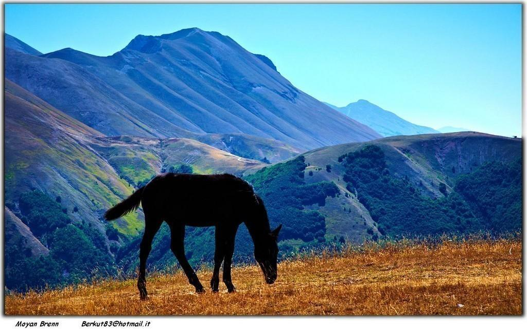 Wild Horse in Mount Sibillini National Park Italy